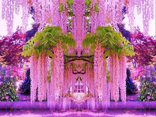 May Fong Robinson - STUNNING WISTERIA - Kawachi Fuji Gardens, Kitakyushu, Japan…