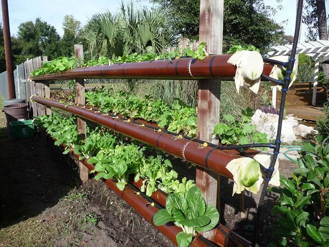 PVC Pipe Lettuce planter.  This would be an awesome way to grow lettuce and keep the snails out.
