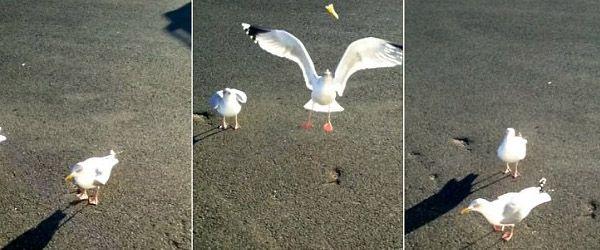 Este homem é um excelente treinador de animais pois conseguiu ensinar a uma gaivota a fazer um pequeno espetáculo sempre que dizia a palavra 'dance'. O animal então batia as patinhas num sapateado muito engraçado. …