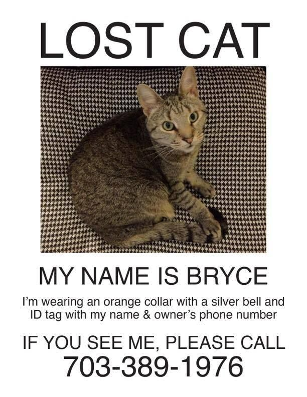 The 25+ best Lost cat poster ideas on Pinterest Iconic movies - lost pet poster