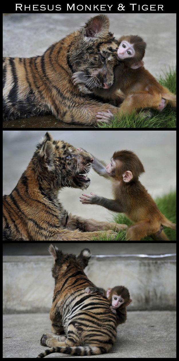to rub one another's faces often... | The 30 Most Inspiring Interspecies Friendships Of The Year