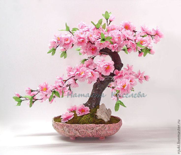 Бонсай Сакура розовая - бонсай,сакура,цветущее дерево,сакура цветущая