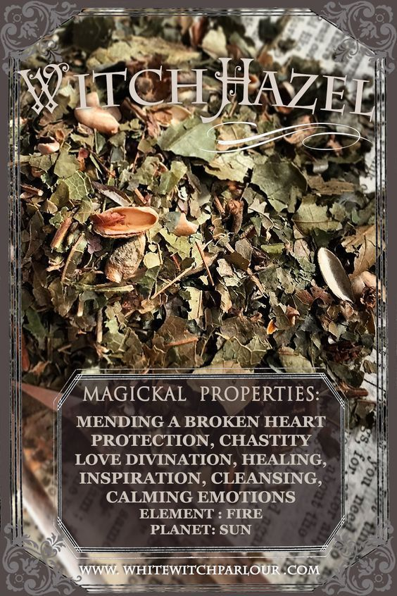 Magickal Properties of Witch Hazel | Witches Of The Craft®️️