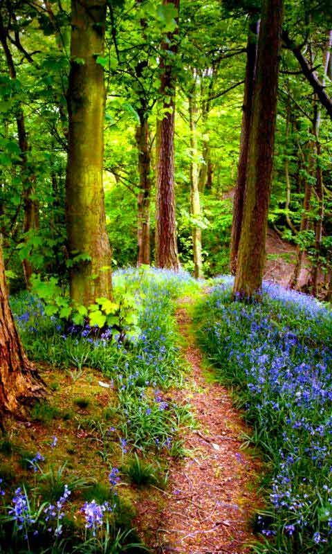 Read More About Free Download for the Wallpaper Fantasy Small Track on the Forest