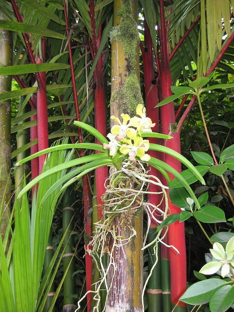 177 best bamboo images on pinterest - Flowers that grow on tree trunks ...