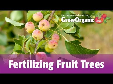 How to Fertilize Fruit Trees: 13 Steps (with Pictures) - wikiHow