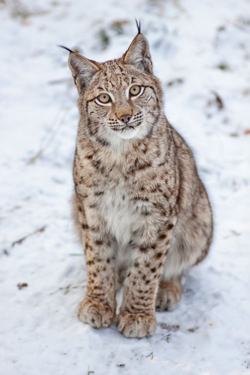beautiful-wildlife:  Love Me by Naturfotografie - Stefan Betz