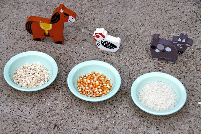 6 Things You Must Know About Producing Livestock Feed ... |Farm Animals Eating Corn