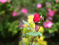 Monthly calendar wallpapers for your desktop by www.kate.net.