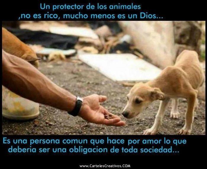 UN PROTECTOR DE LOS ANIMALES No es rico, mucho menos un Dios.... Es una persona común que hace por amor lo que debería ser una obligación de toda sociedad....