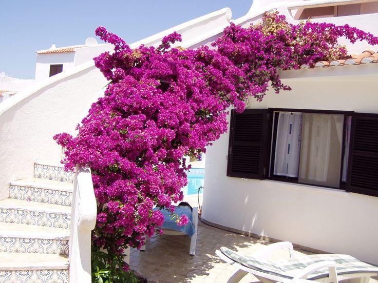 Treppe zum Dach Bilder Außenansicht Pension Vila Horizonte
