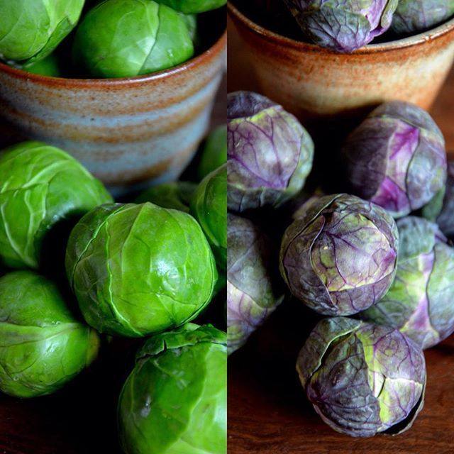 It's peak season and our Sprouts are looking fantastic!! Brussels Sprouts often get picked on as a vegetable, we hear a lot of people say they don't like the taste. But we always say eat them fresh and cook them just right and they are nutty and delicious. #winter #reddarlingsprouts #brusselssprouts