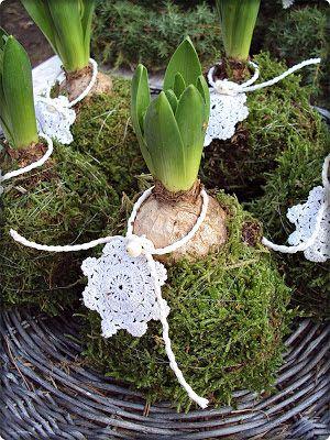 Nat et nature, le blog: Fleurs d'hiver mises en scène