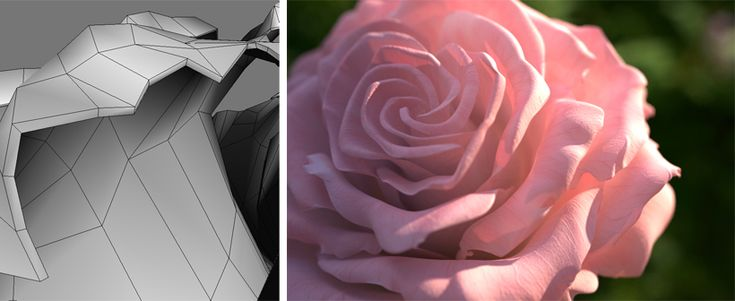 Shading a Rose - Arnold for Maya User Guide - Solid Angle