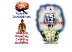 Actions of ganoderma