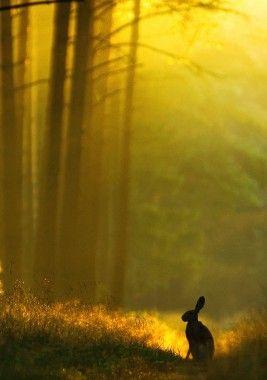 De natuur op zijn mooist gefotografeerd. Prachtige zongloed door de bomen en een wilde haas, een van die mooie taferelen die je kan bijwonen tijdens een mooie wandeling buiten in het bos.     Country Lifestyle in Putten, Gelderland.