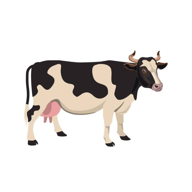 Cow Illustrations Royalty Free Vector Graphics Clip Art Cow Illustration Cow Cow Vector