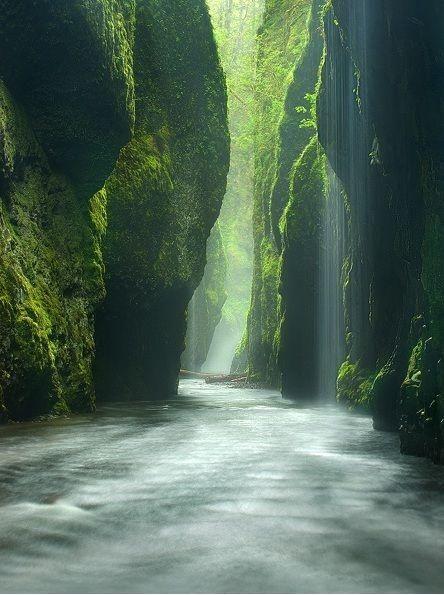 La selva Amazónica. Un viaje sólo para verdaderos aventureros.