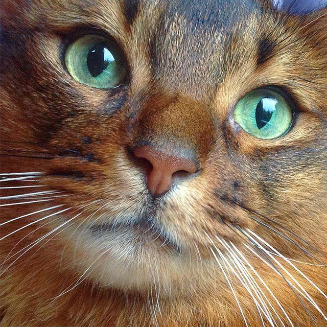 CyBeRGaTa - Cats, Memes, New Mexico — via Kiachero Somali @ kiachero #GreenEyes
