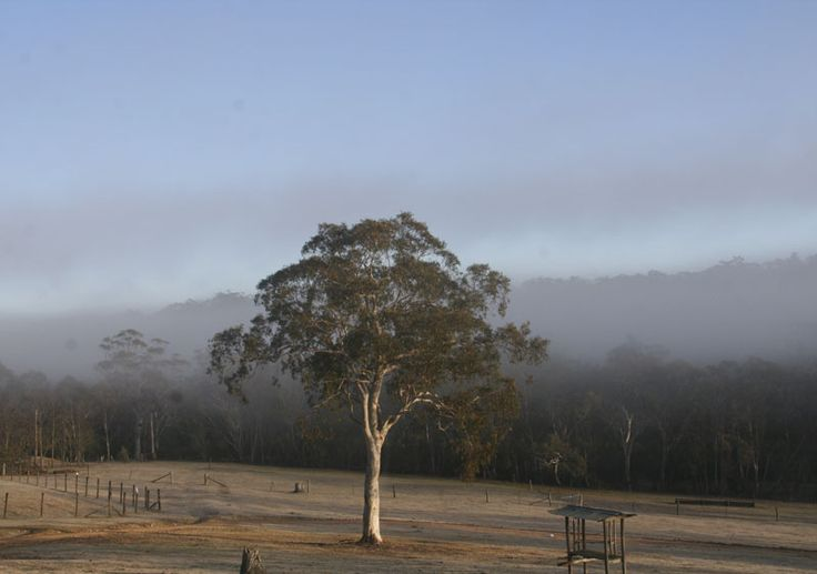 The Picnic Padock in early morning light - July 2014
