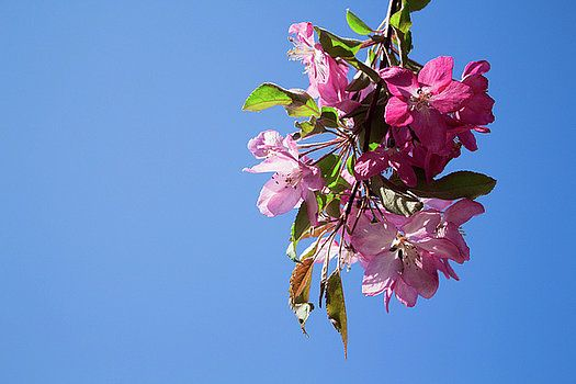 Pink bloom by Olga Olay #OlgaOlayFineArtPhotography #ArtForHome #FineArtPrints #Flower