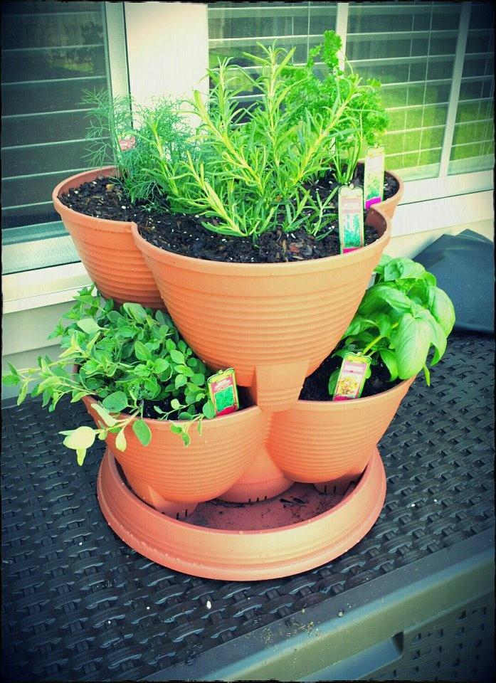 75 Best Images About Vegie Herb Garden On Pinterest