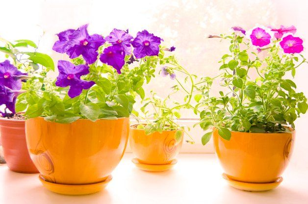 Overwintering Potted Plants Learn how to keep your favorite potted plants with these answers to the most-asked questions about overwintering.