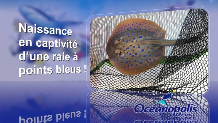 Informations d'Océanopolis diffusées sur le réseaux d'écrans dans le Finistère de Air Media29