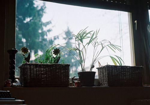 CNV000002 on Flickr. pentax sp1000 film 1 paradies 200 banjaluka march 2012