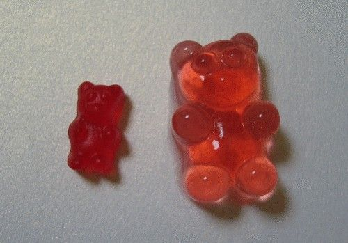 Gummy Bears soaked in Vodka - easier and better than jello shots!