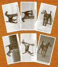 ЭРДЕЛЬТЕРЬЕР комплект 2 названного 6 собаки фото торговые карты