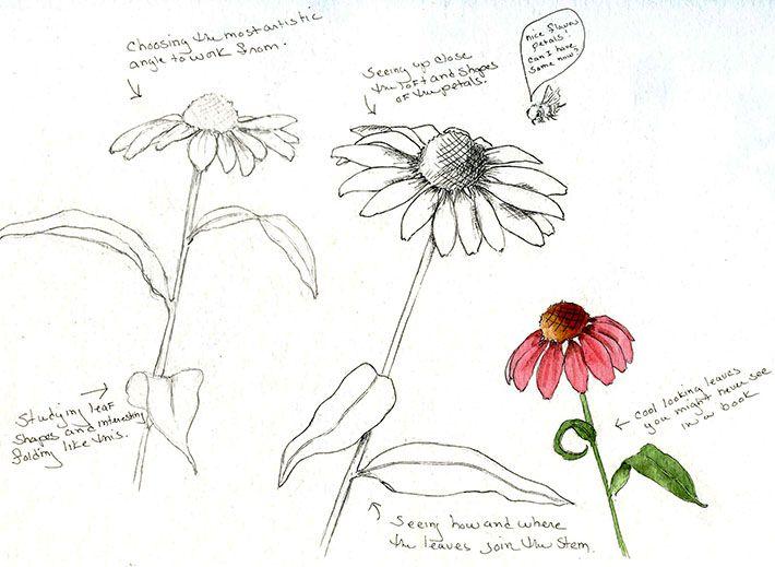 bosquejar Flores
