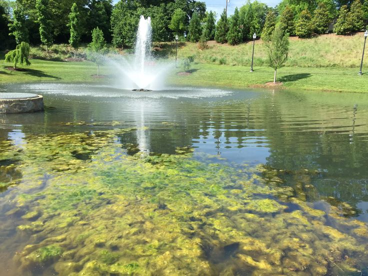 32 best algae aquatic weeds images on pinterest farm for Fish pond repair