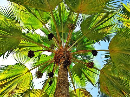 Palm tree...nice perspective ;o)