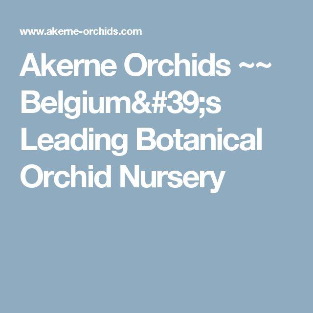 Akerne Orchids ~~ Belgium's Leading Botanical Orchid Nursery