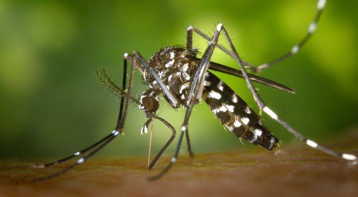 Allontanare gli insetti in modo naturale: gli olii essenziali più efficaci