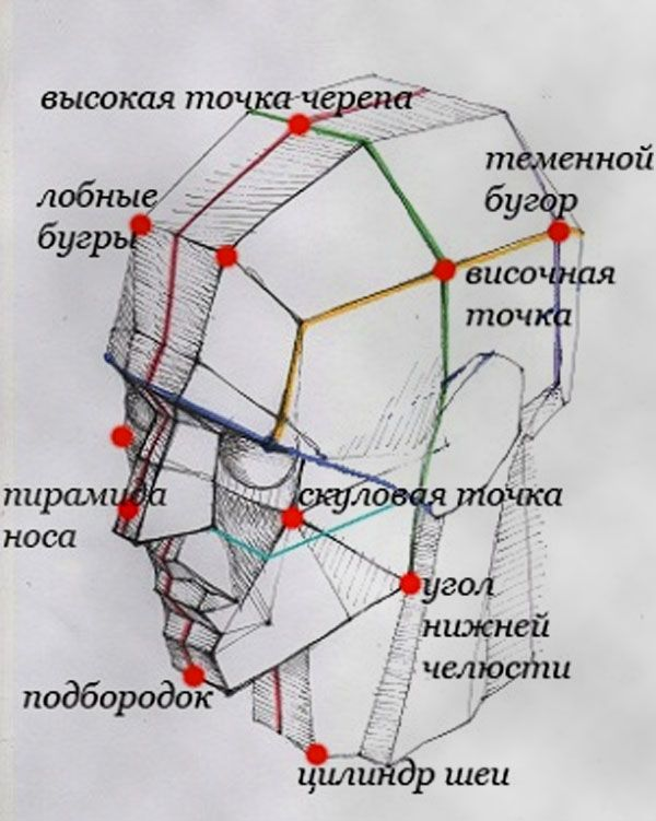 Как нарисовать голову человека поэтапно карандашом. Пропорции головы человека.
