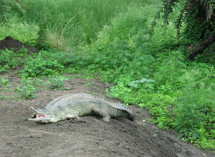bhitarkanika wildlife sanctuary  http://www.heritagetoursorissa.com/