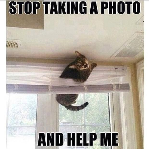 New Hot Funniest Cat Memes To Welcome 2020 Funny Cat Memes Funniest Cat Memes Cat Memes