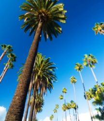 カリフォルニア・ロサンゼルス留学 TAEKOのLAでまなぼ! 語学留学・専門学校留学を応援します!