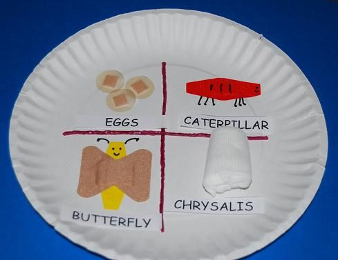 "Transforming Preschool ""BAND AID"" love into a Butterfly's Life Cycle!The Preschool Toolbox Blog"