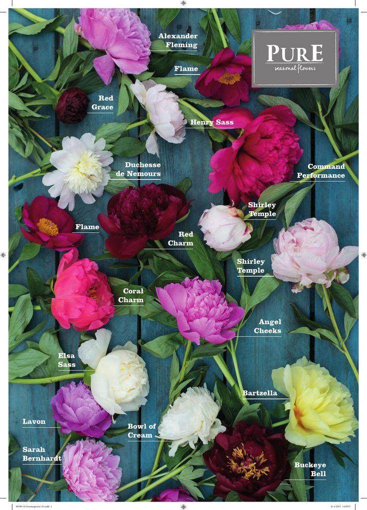Als onderdeel van de promotieactiviteiten PurE seasonal flowers is deze assortimentsposter ontwikkeld. De poster is beschikbaar gesteld aan NL cash & carry's (A0-abri formaat) en op A3-formaat voor exporteurs, om zelf te printen/drukken.