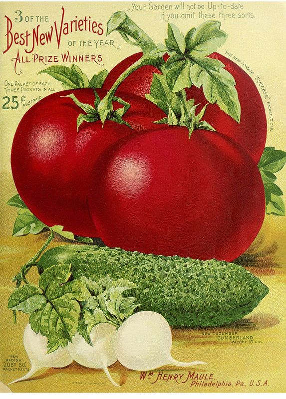1902 Maule's silver anniversary seed catalogue