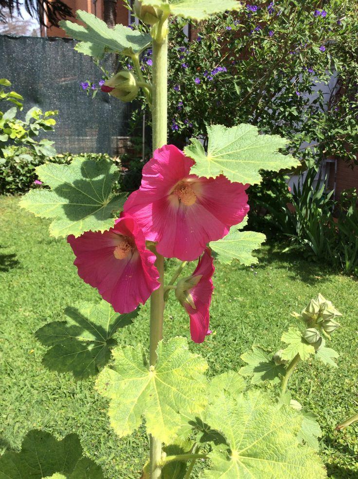 fiori romano bologna - photo#24