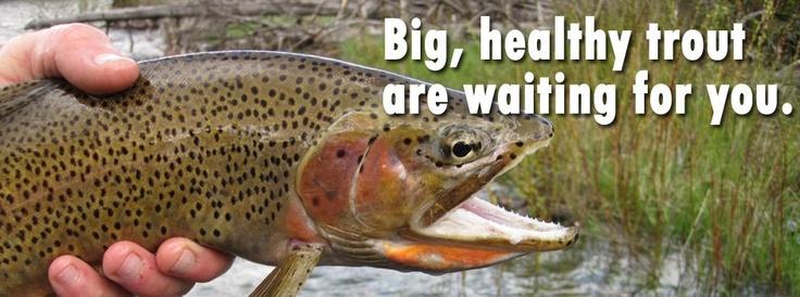 Fun!Beloved Montana, Fly Fish