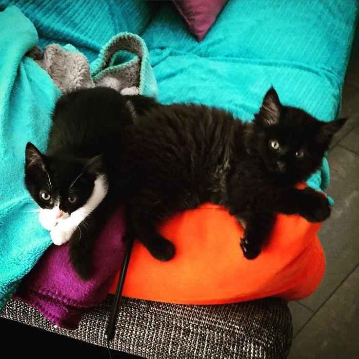Dolce Vita 😃😄😄😻 #siesta #gattini #micini #gatti #instagatti #cuccioli #amoregatto #kittens #catslover #cats #pets #petsofinstagram #couple #coppiaperfetta #laurart #lugano #ticino #svizzera #switzerland #miaomiao #soloamore #coccole #tenerezza #dolcezza #vicinivicini #adorabili