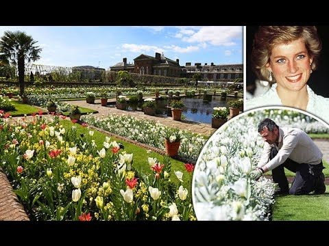 Is This Miracle? Princess Diana's Garden in Full Blooms on 20th Anniversary of Her Death