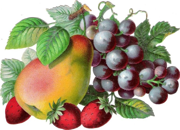 Oblaten Glanzbild scrap die cut chromo Obst 17cm Frucht fruit Erdbeere berry