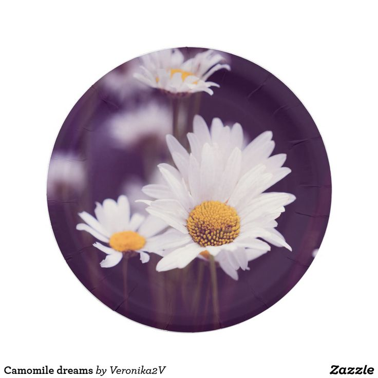 Camomile dreams paper plate. photo, photography, artwork, buy, sale, gift ideas, camomile, flowers, divination, love, violet, purple, liliac, white, dreams, bright, colorful, glow, petals, dark, picnic, plate, paper