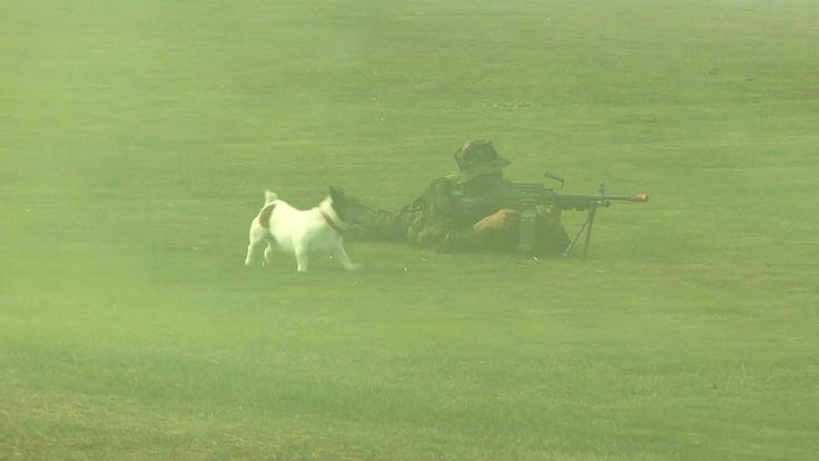 Dog Loves the NZ Army Minimi Firing